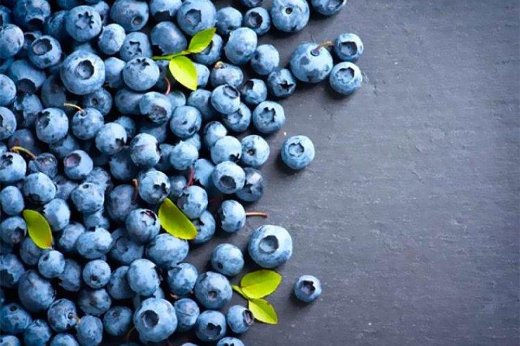 Dark blue fruits