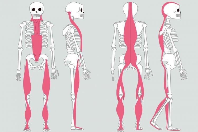 Ефекти от упражненията върху стойката и физиката