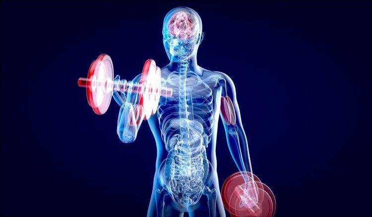 Как тренировките променят тялото - и колко време отнема изграждането му?
