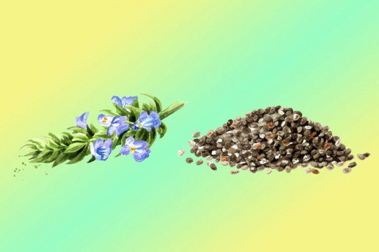 Защо семената от чиа са полезни за вас?